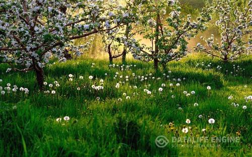 Пейзажи весна обои на рабочий стол